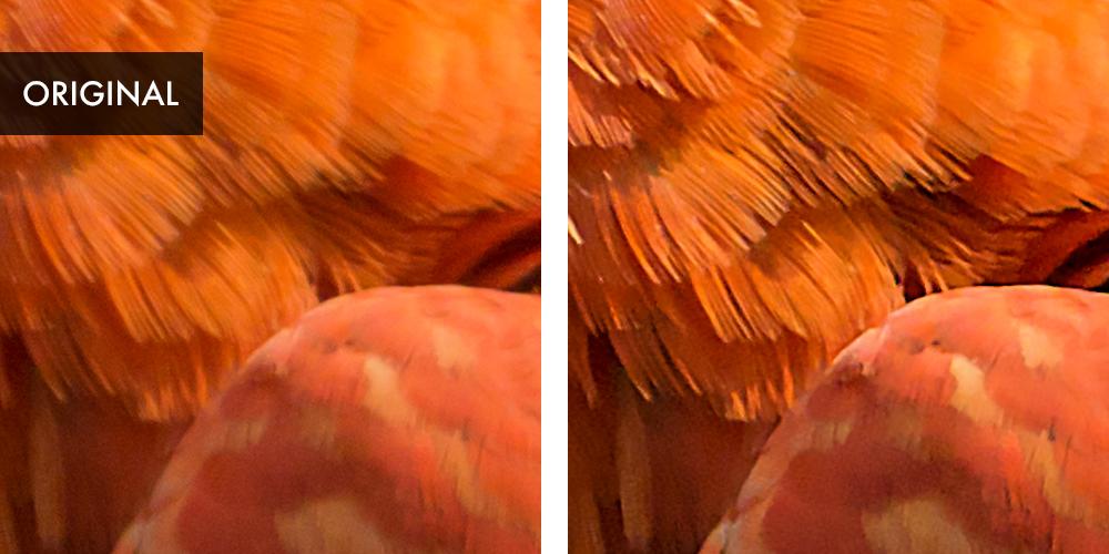 Farbige-Federn
