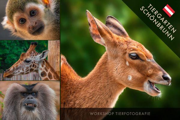 TIERFOTOGRAFIE. Zoo Wien - 6.9.19