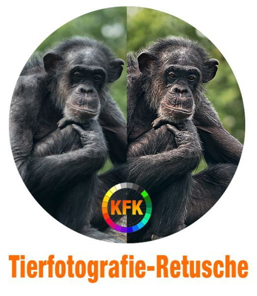 Kaplun Filter Kollektion: Tierfotografie-Retusche (PS-Aktionen)