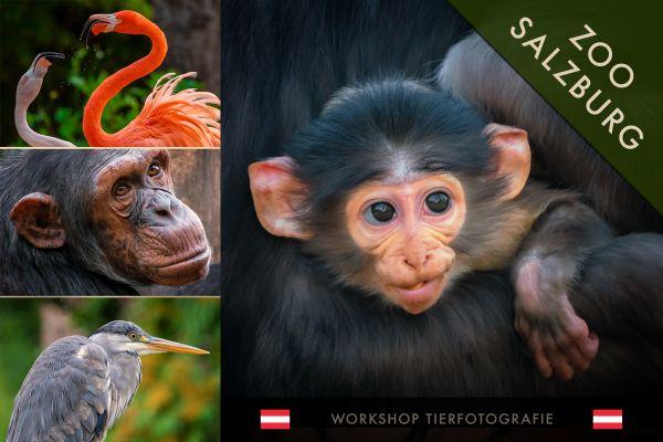 TIERFOTOGRAFIE. Zoo Salzburg - 26.6.20