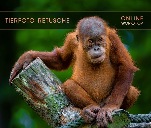Online Workshop: Tierfoto-Retusche - (2 x 2h) - 8./9. Juni 2020
