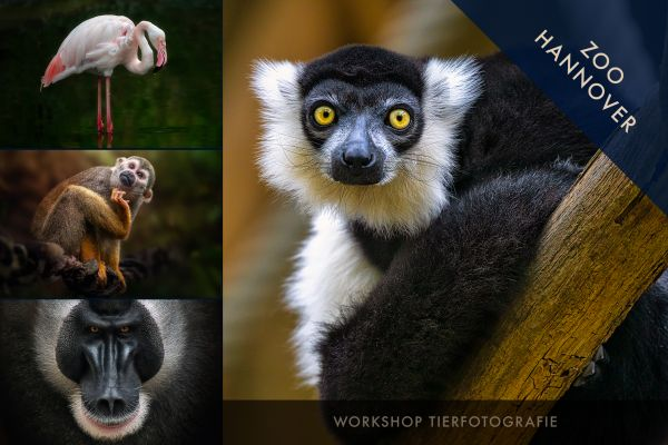 TIERFOTOGRAFIE. Zoo Hannover 29.10.20